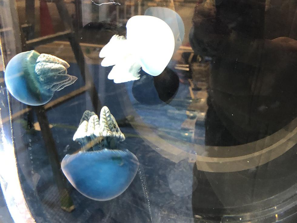 ウミウシ・クラゲのminmin水族館